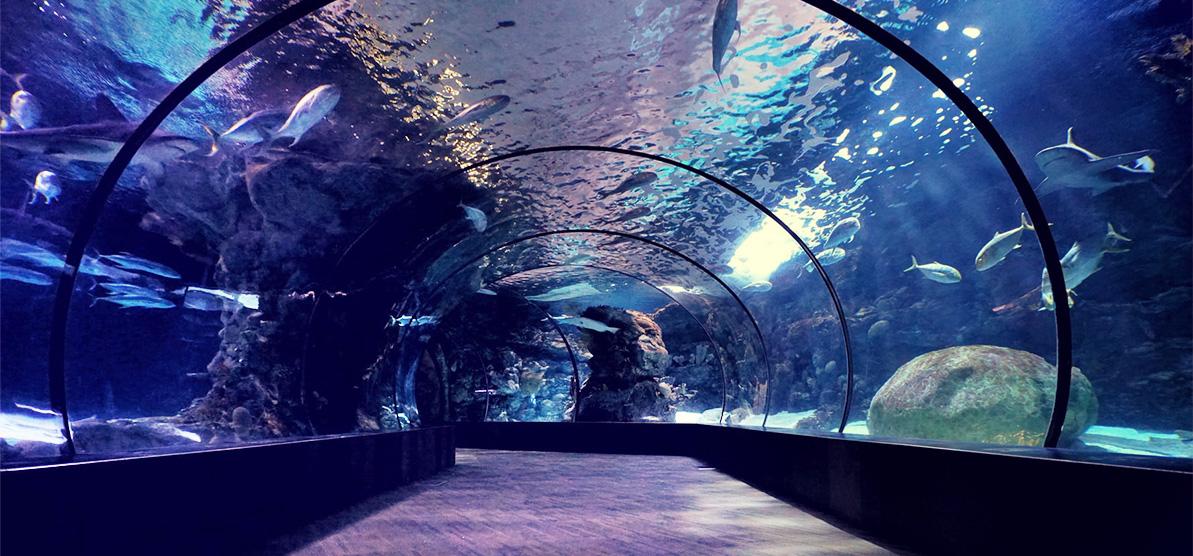 海洋馆水处理设备需要什么特殊功能
